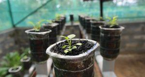 plant-1204662_960_720