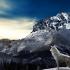 wolf-1338354_1280